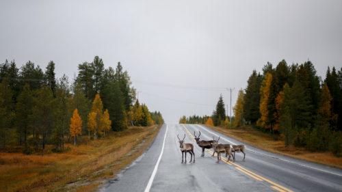 строительство безальтернативных дорог