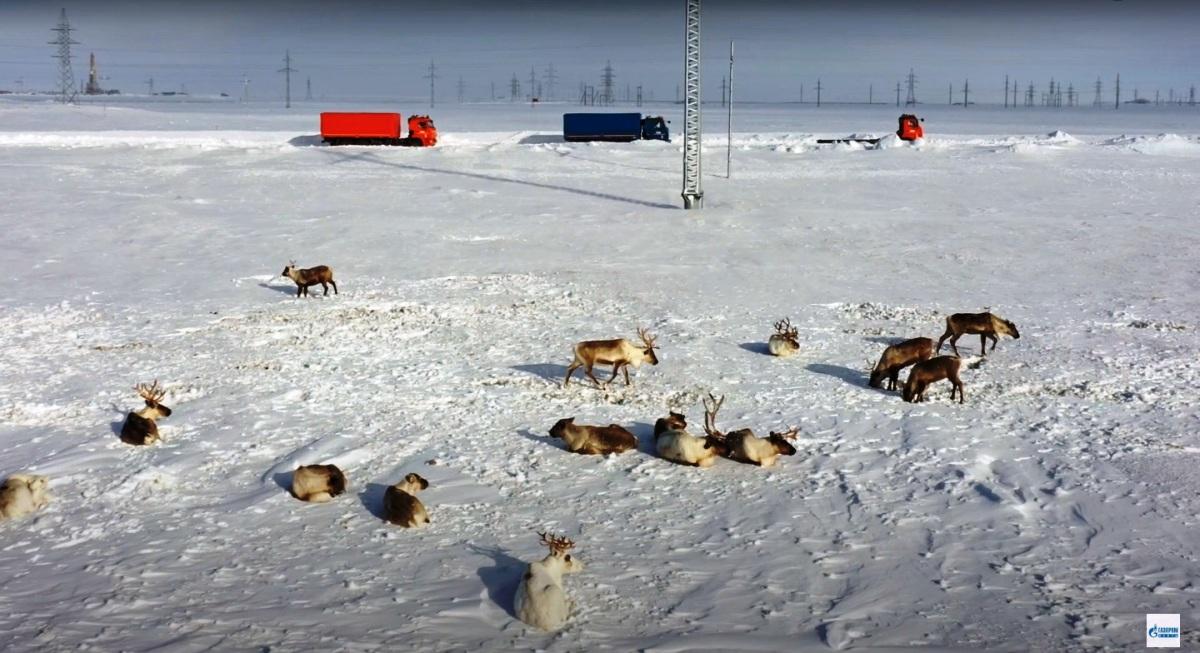 КАМАЗы-беспилотники прошли испытание в Арктике