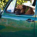 Опрос – с какими животными россияне ассоциируют свои автомобили