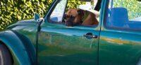 Опрос - с какими животными россияне ассоциируют свои автомобили