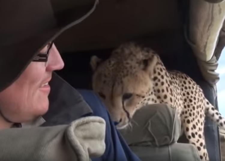 Забавные сюрпризы от животных автовладельцам
